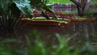 Panning shot of water and greenery in Botanical gardens.