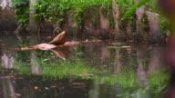 Panning shot of water in botanical garden with bird catching fish.
