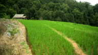 Schwenken: kleine Hütte liegt unter terrassierten Reisfelder am Berghang