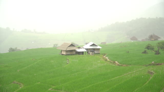 panning: small twice  huts are among rice terrace