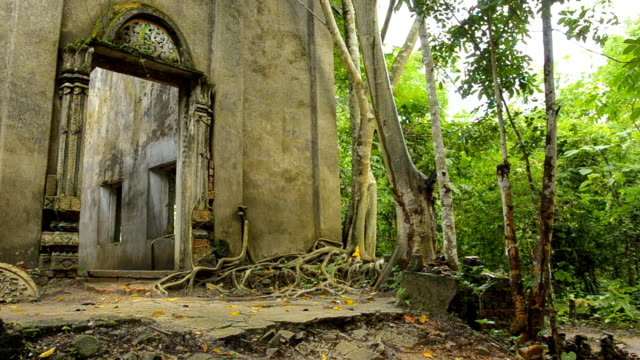 panning : the ruins of ancient temple in forest