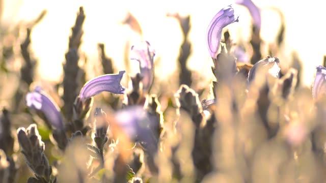 panning : tiny purple garden