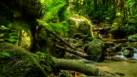 panning: tiny waterfall in summer of tropical forest