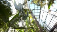 panning : tropical forest in greenhouse