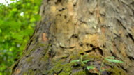 panning : trunk tree to top of tree