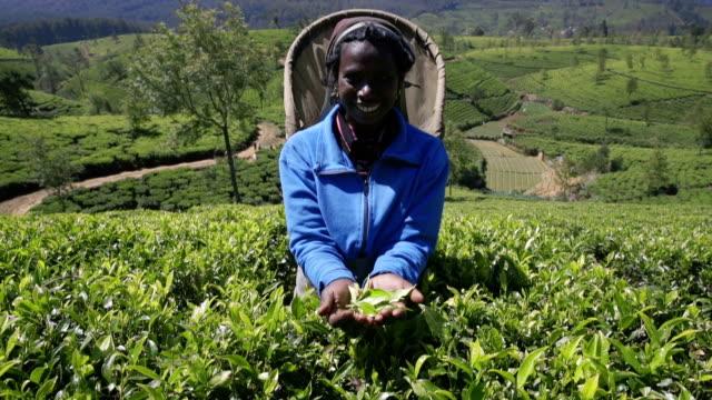 Panning up:  Female tea picker showing tea in her hands