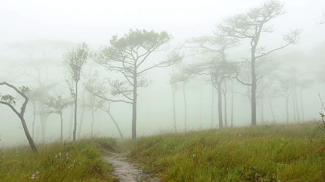 pannen: lopen lijningang mist en dennenbos