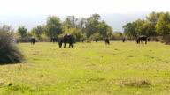 Panning: Water Buffalo in rural