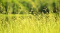 panning : yellow grass flower in daylight