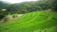 Schwenken: eine kleine Hütte auf der Liste der terrassierten Reisfelder