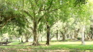 HD panning:Green park with large old deciduous trees and shaded areas.