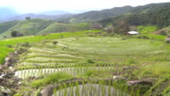 panning:sloped and delighted rice terrace with fresh water