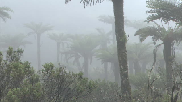 Papua New Guinea; Mt. Wilhelm