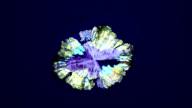 Paracetamol crystal growth
