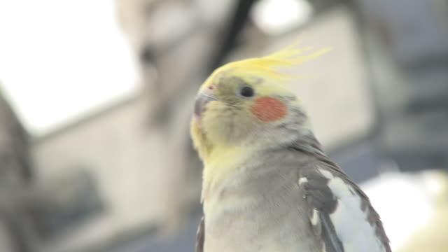 Parakeet in the bird house - HD 30F