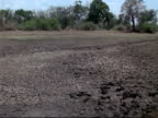 Parched Earth - MS pan right to left across dried up water pool, tree background, Mana Pools, Zimbabwe