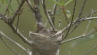 Parent bird feeding chick.