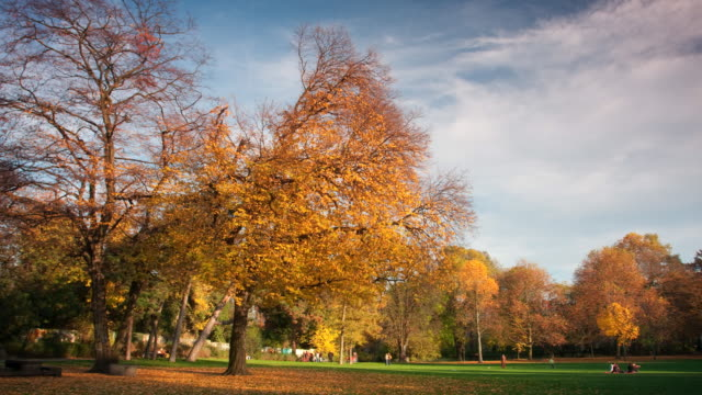 Parco in autunno