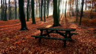 Park Bench In Autumn Forest