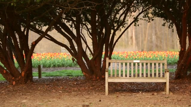 Park bench with tulips