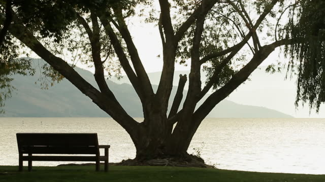 A park with a view on a large tree and a bay