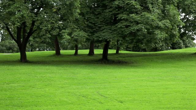 Park mit grünen Rasen.