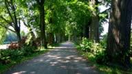 Parkway mit Palmen