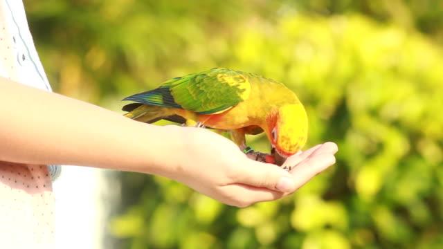 parrot feeding on hand