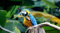 Parrot, Macaw relax