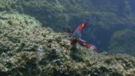 Parrotfish swimming near coral in Tenerife