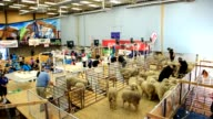 Participants take part in the New Zealand Merino 50th International Shearing Championships on Thursday at the Molyneux Park Stadium in Alexandra...