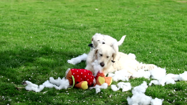 Partners in crime. Comp of dogs having mischievous fun