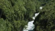 Pascua River Flows Through Lush Forest