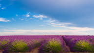 Passing by lavender fields while driving on a lonely road