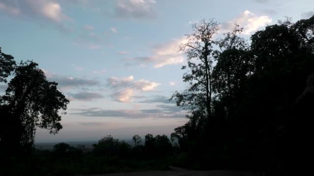 Pastel Clouds over Dark Forest
