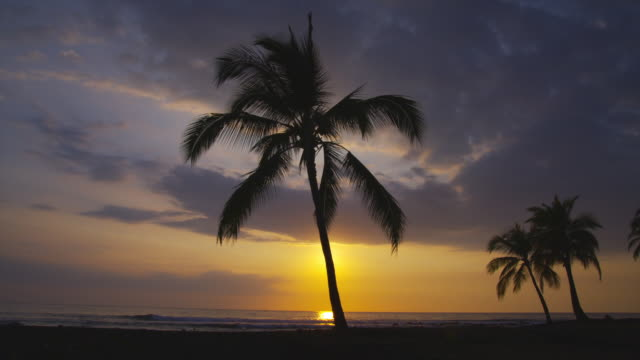 A pastel sky silhouettes palm trees on a quiet Hawaiian beach.