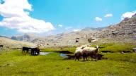 Pastoral scene at Aladaglar