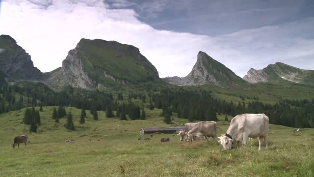 Pasture with Cows - Alm mit Kühen