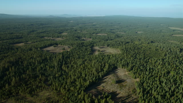 Patches of clearcut forest, Shasta County, Northern California.