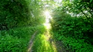 Path between hedge in spring, Kahl am Main, Bavaria, Germany