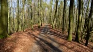Path in the beech tree forest with a view into the tree tops, Hesse, Germany