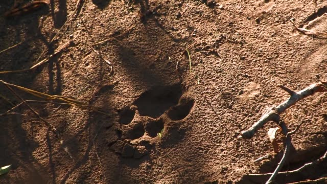 A paw print in sand. Available in HD.