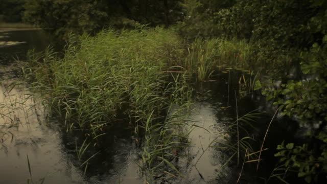 Friedliche Landschaft. See, umgeben von Schilf