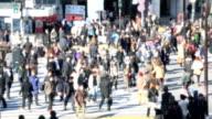 HD: Pedestrians cross at Shibuya Crossing