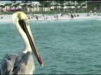 Pelican 2 NTSC
