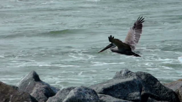 Pelican Flying Over The Waves