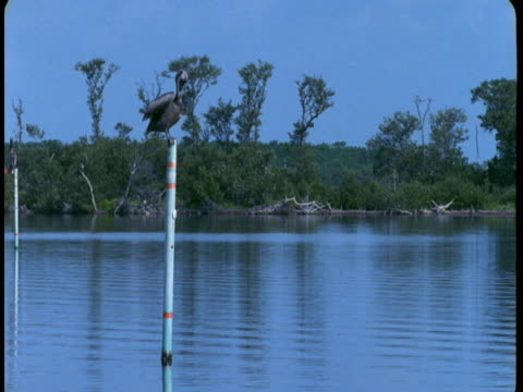 A pelican perches on a post near the water's edge.