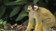 Penguin chicks squirrel monkeys and gorillas are among the animals having their vital statistics recorded at ZSL London Zoo's 2017 annual weigh in