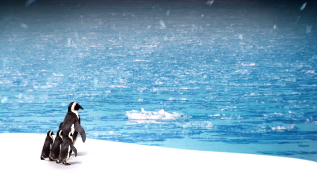 EDITED MONTAGE - Penguin family.