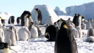 penguin traffic